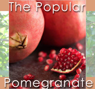 pomegranate2007.jpg