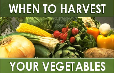vegetableharvest20071.jpg